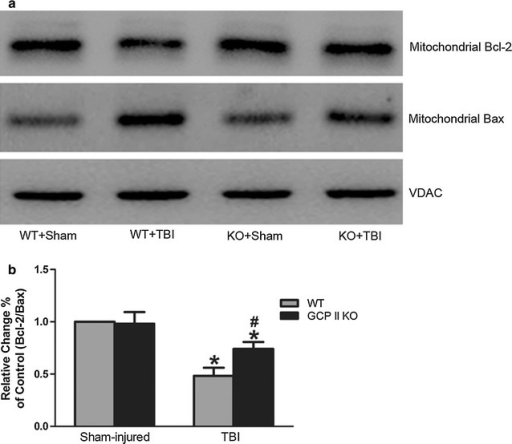 Effects of GCPII KO on the expression of mitochondrial Bcl-2 and Bax. Representative immunoblots (a) and densitometric analysis (b) revealed a significant reduction in the mitochondrial Bcl-2/Bax ratio following TBI in both wild type and KO mice. The ratio in GCPII KO mice was significantly higher than their WT counterparts. The immunoblot data were scanned and normalized to the density of VDAC. The ratio of the normalized data for the wild type/sham mice was given a value of one. Data from other groups are expressed as values relative to the value for the wild type/sham mice. Data were represented as mean ± SEM (n = 6 per group); *p < 0.05, versus sham control of the same genotype; #p < 0.05, versus injured wild-type mice