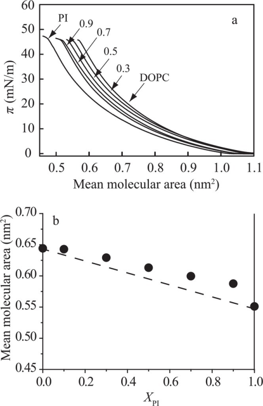 Intermolecular interaction in the PI/DOPC monolayer system. (a) π–A isotherms of pure PI, pure DOPC and PI/DOPC mixed monolayers on the water subphase at 25±0.1°C. The molar fractions of PI, XPI, are indicated in the figure; 0 (DOPC), 0.3, 0.5, 0.7, 0.9 and 1.0 (PI). (b) Mean molecular area versus composition analysis at 30 mN/m. The dotted line represents area additivity (Eq. (1)). The molecular area of DOPC (0.64 nm2) is larger than that of PI (0.55 nm2) at 30 mN/m.