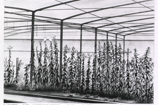 <p>An experimental garden showing plants growing under controlled conditions; structural supports of a greenhouse.</p>