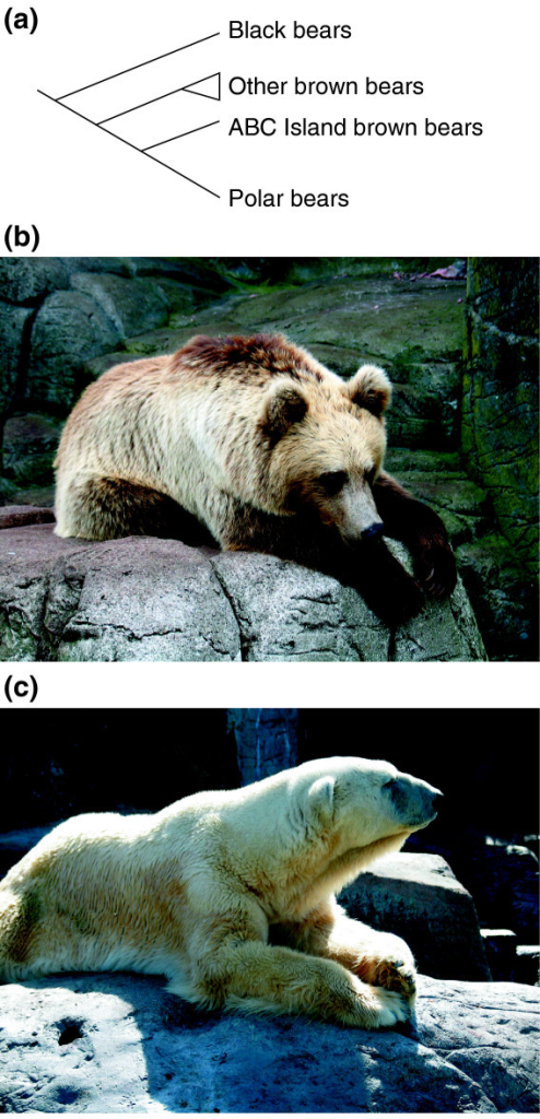 evolutionary relationship and hybridization of brown In this review, recent advances in heterologous hybridization are reviewed, and   hybridization performance did rank according to evolutionary relationships,  with  gasch, a p, huang, m, metzner, s, botstein, d, elledge, s j and  brown,.