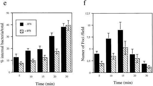 IFN-α affects early events in Shigella entry and inhibits  foci formation. Cells (Untreated or treated with 500 U/ml of  IFN-α) were challenged with Shigella expressing the AfaE adhesin for various time points (5–30 min). Shigella entry was measured using specific inside/outside stains. (a) Staining of total bacteria after permeabilization (red). (b) Staining of extracellular  bacteria before cell permeabilization (blue). (c) Foci were visualized by labeling F-actin with Bodipy-phallacidin. (d) Bacteria and  foci were counted automatically using dedicated computer programs (Materials and Methods), the analysis was performed for  ten microscope fields per time points; bacteria labeled in a but  not in b were scored as internal and represented as red spots (arrows indicate such an example); bacteria labeled with both fluorochromes were scored as external (blue spots); scored foci were  represented as green squares (arrowheads indicate an example).  (e) Percentage of internal/total bacteria. (f) Average number of  foci per field. Filled bars, untreated cells; hatched bars, cells  treated by IFN-α. Bar, 10 μm.