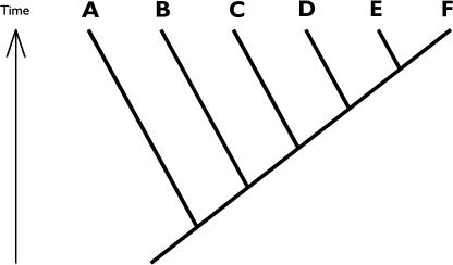 "Example phylogeny, where letters symbolise species. Not a single student (n = 31) was able to give the correct answer to the question ""which species is/are most closely related to species B"""