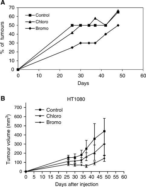 (A) Incidence of tumours induced by subcutaneous (s.c.) injection of HT1080 cells (percent of animals bearing tumour higher than 80 mm3). (B) Growth curves of tumour formed, in nude mice (n=6), after s.c. injection of HT1080 cells (1 × 106) mixed with matrigel. The mice were examined twice a week for tumour appearance and measurement.