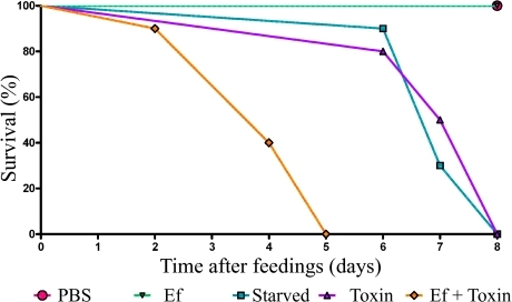 The presence of B. thuringiensis toxin during E. faecalis feeding promotes larval death. Early-5th-instar larvae were force fed PBS, E. faecalis alone (Ef), B. thuringiensis toxin alone (Toxin), or E. faecalis and B. thuringiensis toxin together (Ef + Toxin). Larvae were given unmodified food ad libitum for the duration of the experiment. One experimental group was force fed PBS, and food was subsequently removed for the duration of the experiment (Starved). Larval deaths were recorded over time (n = 12/group, 1 representative experiment of 12).