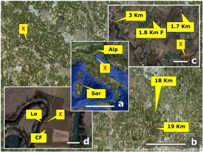 Air view maps of the crime scene and surroundings depicting the sites from which samples were taken, starting from the murder spot, and at increasing distances.The inset map of Italy shows the area location as well as the sites of two soils taken at far distance as outgroup references. X: spot where the corpse was found (margin of a corn field), CF (inside corn field), Le (ridge of the levee bordering the corn field). 1.7 Km, 3 Km, 18 Km, 19 Km: sites located at 1.7, 3, 18, 19 kilometers from the murder site and sharing the same crop (corn); 1.8 KmF: (fallow), site located at 1.8 km but not cropped for over 50 years and featuring natural vegetation and secondary growth. Sar: soil from an uncultivated area in Sardinia (Castelsardo); Alp: soil from an uncultivated area in the Alps (Soranzen). All samples, except the two outgroup references, were chosen in equivalent soil conditions as regards parent material, depositional basin river and soil type (Hypercalcaric-Fluvic Cambisols, WRB 1998, or Oxyaquic Eutrudept fine-silty, carbonatic, mesic, USDA 1998) to minimize the variability that would occur across different soil types. For details and exact coordinates, see Tab.1. Scale bars equal: 500 km (a); 5 km (b); 500 m (c); 50 m (d).