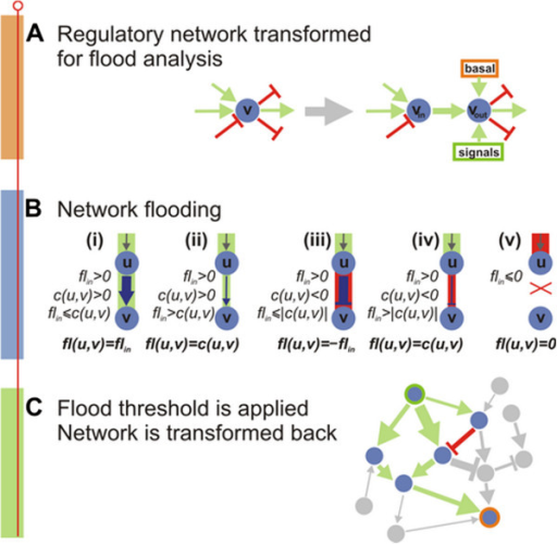 Pipeline for flooding minimization. (A) Transformation of the regulatory networks for flooding analysis as described in the text. (B) Flooding the network; for a given regulator node u with a positive total incoming flin the following scenarios are possible for the flood fl(u,v) through the edge (u,v): (i) and (ii) if edge capacity c(u,v) is positive and is greater or smaller than the value of the incoming flood, respectively; (iii) and (iv) if edge capacity c(u,v) is negative and its absolute value is greater or smaller than the value of the incoming flood, respectively; (v) if the total incoming flood floodin is negative, then the node is down-regulated and no flood is propagated regardless of the capacity of the edge. (C) Selection of nodes/links with flood above the threshold and the reverse transformation of the network.