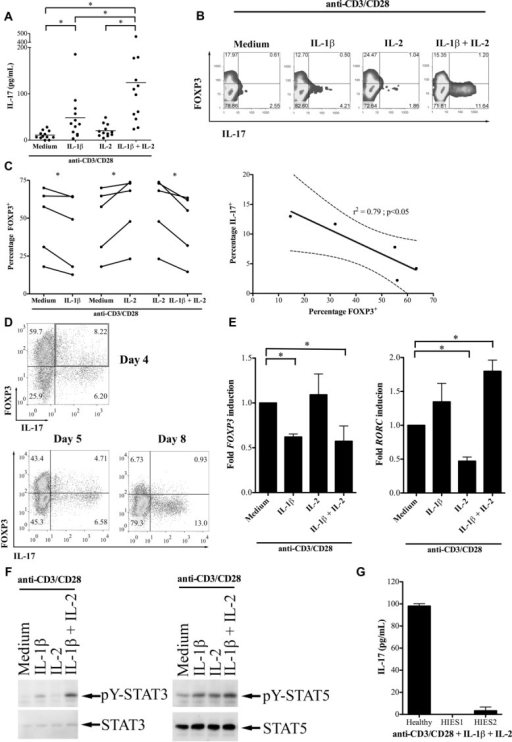"Human Treg cells are induced to produce IL-17 and to downregulate FOXP3 by IL-1β. (A) ""Total"" CD4+CD25+ Treg cells from healthy donors were activated with anti-CD3/CD28 in medium supplemented with IL-1β, IL-2 or IL-1β+IL-2. IL-17 production was measured by ELISA and shown as mean of 12 donors. (B) A representative example of ICS for IL-17 and FOXP3 in which Treg cells were activated for 5 days with anti-CD3/CD28 together with the cytokines indicated. Data shown are from one experiment representative of five performed. (C) Cumulative data from five independent experiments showing FOXP3 staining in Treg cells activated with anti-CD3/CD28 together with cytokines (left) and negative correlation between the percentages of FOXP3+ and IL-17+ cells (right; r2 = 0.79, p < 0.05). The solid and dashed lines show the linear regression and 95% confidence interval, respectively (right). (D) A representative ICS for FOXP3 and IL-17 expression in Treg cells activated with anti-CD3/CD28 in the presence of IL-1β and IL-2, highlighting the double-positive population on day 4 (top, upper right quadrant) plus a kinetic transition through a double-positive phase (bottom). Data shown are from one experiment representative of five performed. (E) qRT-PCR for FOXP3 (left) and RORC (right) from Treg cells activated with anti-CD3/CD28 with and without cytokine. Data are normalized to unsupplemented medium; shown are mean +SD of triplicate samples and are from one experiment representative of two performed. (F) Representative Western blot showing total and phosphotylated (pY) STAT3 in Treg cells activated with anti-CD3/CD28 in the presence of the cytokines indicated. Data shown are from one experiment representative of four performed. (G) IL-17 production from Treg cells of a healthy control and two patients with hyper-IgE syndrome activated with anti-CD3/CD28 and exogenous cytokine. Data are shown as mean +SD and are from one experiment. *p < 0.05, One-way ANOVA (A), paired t-test (C, left panel), F test (C, right panel)."
