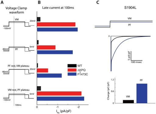 "Voltage clamp protocols demonstrate themechanism of late current generation in LQT3 mutations.Panel A illustrates the voltage clamp waveform used. Panel Bdemonstrates the important role of resting membrane potential and plateaupotential on degree of late sodium current in ΔKPQ (red bar)and F1473C mutations (blue bar) compared to WT (black bar).For a ""VM-like"" voltage clamp protocol (holding −100 mV,step potential 20 mV, top row), similar persistent current isseen for KPQ and F1473C mutations. When holding potential ischanged to −80 mV mimicking PF AP resting potential, second row,persistent current is less for the KPQ mutation than for the F1473C mutation (whichhas increased availability at this potential). Third andfourth rows show the individual effect of altering plateau and resting potentials.Panel C) Response of step potentials simulating VM (black)and PF (blue) in cells carrying the S1904L mutation.The ""PF-like"" voltage clamp waveform produces more inwardcurrent at all time points, leading to more accumulated inward charge as demonstratedbelow in the bar graph."