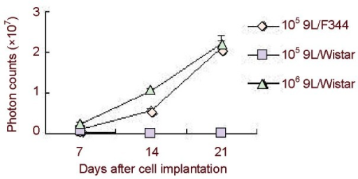 Photon counts of 9L/F344 and 9L/Wistar rats implanted with 9LLUC cells at day 7 to day 21.There were no obvious differences among groups at day 7 after cell implantation. Tumors disappeared gradually in 9L/Wistar rats receiving 105 9LLUC cells, while a significant increase was observed between 9L/Wistar rats receiving 106 9LLUC cells and 9L/F344 rats receiving 105 9LLUC cells at day 14. Compared with 9L/Wistar rats, the glioma in 9L/F344 rats continued to develop. The data are expressed as mean ± SEM and were analyzed with Student's t-test.