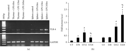 mRNA expression of TLR-4 in the spleen and thymus: the results in this figure (a) represents the differential transcription of tlr-4 gene on LPS administration in thymus and spleen of Swiss albino mice from triplicate experiments; lane 1 represents TLR-4 mRNA in thymus from control mice (CT), lane 2 thymus from LPS treated mice at 6 hours after treatment (LT6), lane 3 thymus from LPS treated mice at 12 hours after treatment (LT12), lane 4 thymus from LPS treated mice at 24 hours after treatment (LT24), lane 5 represents spleen from control mice (CS), lane 6 spleen from LPS treated mice at 6 hours after treatment (LS6), lane 7 spleen from LPS treated mice at 12 hours after treatment (LS12), and lane 8 spleen from LPS treated mice at 24 hours post treatment (LS24). (b) Is the diagrammatic representation of the fold difference in their expression compare to control and among different time periods of treatment. Molecular weight marker (100 bp). The following symbols indicates the significant change in the expression of TLR-4 between: *control versus LPS treated tissue, #LPS treatment for 6 hours versus LPS treatment for 12 and 24 hours, %LPS treatment for 12 hours versus LPS treatment 24 hours. Significant change (P < 0.05).