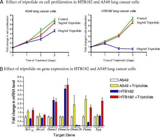 The effect of triptolide on cell proliferation and gene transcription in both A549 and HTB182 lung tumor cells. For cell growth study, cells were collected at 24, 48, and 72 h after the triptolide treatment. For gene transcription study, cells treated with triptolide (5 ng/ml for HTB182 and 10 ng/ml for A549 cells) for 20 h and total RNA isolated from the cells were analyzed by real time PCR assay