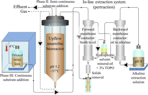 Bioreactor system schematic. Diluted wine lees was fed to an upflow anaerobic reactor microbiome. In-line extraction via a membrane-based liquid-liquid extraction system (pertraction) was used to continuously recover hydrophobic, undissociated MCCAs from a bioreactor broth recycle flow through the forward membrane contactor. After intermediary recovery in a mineral oil solvent, MCCAs were then transferred across a second, backward membrane contactor to an alkaline extraction solution. Through automatic base addition to the alkaline extraction solution, the pH gradient was maintained, and these products accumulated in the alkaline extraction solution as medium-chain carboxylates (MCCs). Adapted from Kucek et al. (2016a).