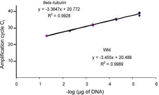 Primers for Wlds and β-tubulin have very similar R2 values. Standard curves for the Wlds and β-tubulin gene in a serially diluted (1 in 10) template genomic DNA sample from wild-type (C57Bl/6J). Efficient amplification was obtained for both sets of primers, as demonstrated by the slopes of linear regression of the standard curves, and good correlation coefficients. Ct is cycle threshold.