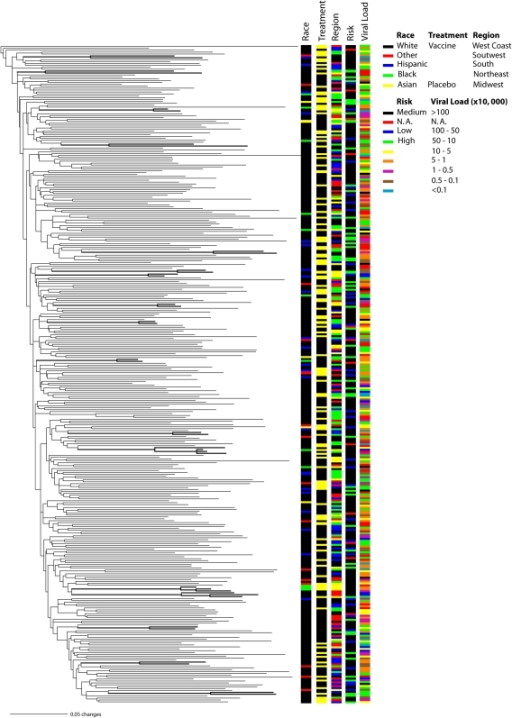 Maximum likelihood phylogenetic inference of North American HIV-1 subtype B population structure based on the VAX004NA data set. Branch lengths are shown proportional to the amount of change along the branches. Clades supported by bootstrap proportions ≥70% or posterior probabilities ≥0.95 in the Bayesian tree are shown in bold. Only one clone per patient is represented for simplicity.