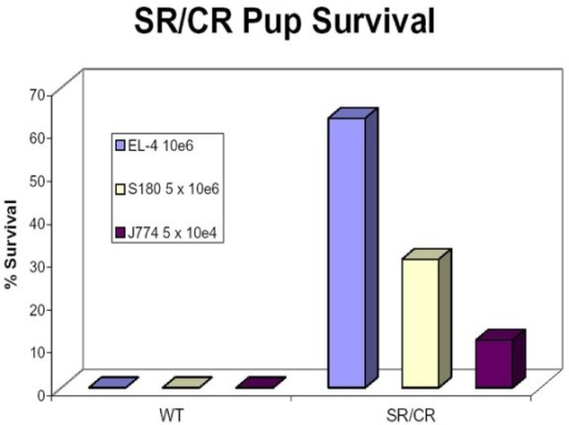 Naïve SR/CR pups resist the initial challenge with EL-4 and J774. Pups from an SR/CR × WT cross were challenged with 10e6 EL-4 prior to being challenged with any other cancer cell line and 22 out of 35 pups survived. Pups from an SR/CR × WT cross that were challenged with 5 × 10e5 and a second challenge with 5 × 10e6 S180 have a historical survival rate of ~30% [1,2]. When nine pups from an SR/CR × WT cross were challenged with 5 × 10e4 J774 prior to being challenged with any other cell line, one mouse survived. All WT mice challenged with EL-4, S180, and J774 at the indicated doses uniformly died. Mice were monitored for at least 60 days after challenge.