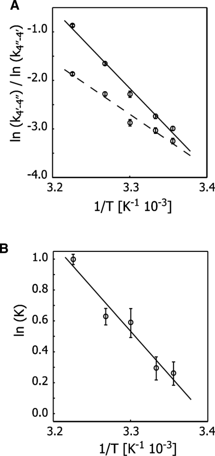 Analysis of the refolding reaction of sequence 4 in terms of kinetic and thermodynamic parameters obtained from longitudinal exchange experiments on the 2′-O-13CH3-uridine label. (A) ln (k4′→4′′) (solid line) and ln (k4′′→4′) (dashed line) as a function of the inverse temperature. (B) ln (K) [computed as ln (k4′→4′′/k4′′→4′)] as a function of 1/T. Error bars were obtained on the basis of duplicate data points by a Monte Carlo analysis, and regression was performed on averaged values of k4′→4′′, k4′′→4′, and K.