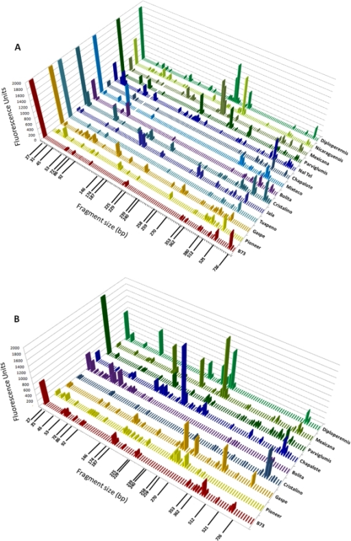 Profiles of endophytic microbial communities present in seeds of diverse Zea genotypes.Shown are profiles of (A) first generation seeds and (B) second generation seeds using bacterial DNA fingerprinting (16S rDNA TRFLP). Each peak is the fluorescence intensity average of 3 TRFLP amplifications from 15 pooled seed, a semi-quantitative indicator of microbial titre. The immediate parents of Generation 1 seeds were grown in diverse geographic locations as indicated in Figure 1 and Table 1, while all Generation 2 seeds came from Generation 1 seeds planted in a common field in Guelph, Canada. 16S rDNA amplicons were first generated using forward primers 799f/1492rh and then were restricted using DdeI. Small fragments and those corresponding to 16S chloroplast rDNA or 18S rDNA were removed. In Generation 2, a few genotypes did not produce mature seed and were not included.