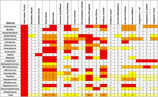 Summary of functional traits exhibited by cultured seed endophytes grouped by bacterial genus.Light yellow shading indicates that <25% of isolates from the Zea genotype indicated exhibited the trait, deep yellow indicates 25–50%, orange indicates 50–75%, and red indicates 75–100%. A more detailed listing by isolate is included in Table S4.