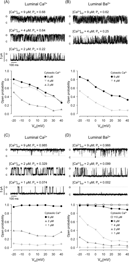Effects of luminal M2+ on RyR2 voltage-dependence.(A-B) Effect of luminal M2+ on cytosolic Ca2+ sensitivity and voltage dependence of a RyR2 that displays modal gating. Single-channel recordings of a RyR2 exposed to different [Ca2+]cyt with 50 mM luminal Ca2+ as current carrier (Vm = 0 mV). (B) Traces of the same channel shown in (A) after replacement of the luminal solution with 50 mM Ba2+. In (A) and (B), the bottom panels summarize the open probabilities as a function of holding voltage of the channel exposed to the indicated [Ca2+]cyt. Notice that increasing lumen → cytosol M2+ flux (by making Vm more positive) decreased Po regardless of the identity of the luminal M2+. (C–D) Effect of luminal M2+ on cytosolic Ca2+ sensitivity and voltage dependence of a RyR2 that displays high Po mode. Single-channel recordings of a RyR2 exposed to different [Ca2+]cyt with 50 mM luminal Ca2+ (C) or 50 mM luminal Ba2+ (D) as current carrier (Vm = 0 mV). Bottom panels show open probabilities as a function of voltage. In contrast to the RyR2 shown in (A) and (B), this channel is virtually voltage insensitive when luminal Ca2+ is the current carrier. However, in the presence of [Ca2+]cyt≤4 µM and luminal Ba2+, increasing Vm decreased Po. This voltage sensitivity was abolished by further activating the channel upon addition of Ca2+ to the cytosol ([Ca2+]cyt ≥9 µM).