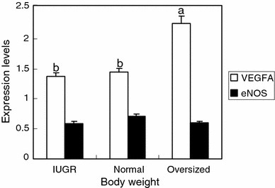 Effects of body weight on the VEGFA and eNOS gene expression levels in the umbilical vein