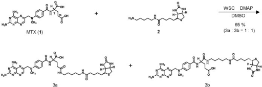 Synthesis of bio-MTX (3).The reaction gave bio-MTX 3a and 3b as a 1∶1 mixture.