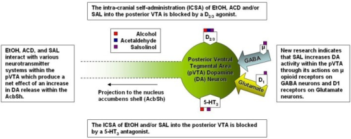 A simplified representation of the sites of action for alcohol and alcohol metabolites on posterior ventral tegmental area dopamine neurons.