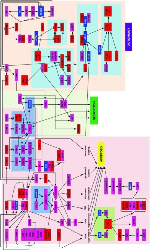Schematic representation of three PCD modules.Diagram s   Open-i