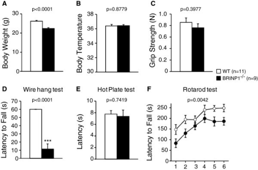 General health and neurological screening of BRINP1-KO mice. (A) Body weight of BRINP1-KO mice was reduced to about 85% of wild-type mice. (B) Body temperature was measured at rectum. (C) Grip strength of forelimb in Newton. (D) Latency to fall (s) showed in wire hang test. (E) Hot plate test at 55°C. (F) Rotarod test. (wild-type mice, n = 11; BRINP1-KO mice, n = 9) Error bars indicate SEM.