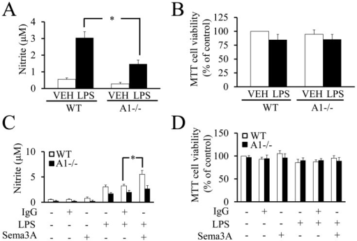 Sema3A increases NO production through Plexin-A1 receptor on microglia in response to LPS. (A) In culture, NO production level is significantly lower in LPS-stimulated Plexin-A1−/− microglia as compared with LPS-treated WT microglia. (B) MTT assay reveals no significant differences in cell viability between each experimental group. (C) Addition of Sema3A and LPS in culture to WT microglia significantly increases NO production as compared with microglia treated with LPS and control IgG. Treatment of Plexin-A1−/− microglia with Sema3A and LPS shows no significant increase of NO production as compared with Plexin-A1−/− microglia treated with LPS and control IgG. (D) MTT assay shows no significant differences between each experimental group. VEH, vehicle; LPS, lipopolysaccharide; WT, wild-type; A1−/−, Plexin-A1−/− microglia.