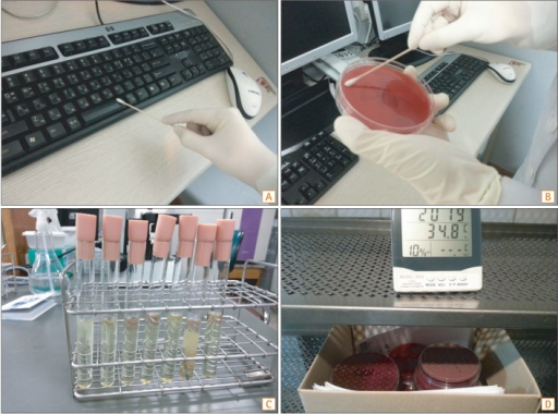 The methods of environmental culture. (A) Sterile cotton-tipped swab moistened with sterile saline was used to swab the surfaces of 197 samples. (B) We cultured the swab in the blood agar plate. (C) Samples from the colonoscopy room were put in the thioglycollate broth. (D) The samples were cultured for 2 weeks.