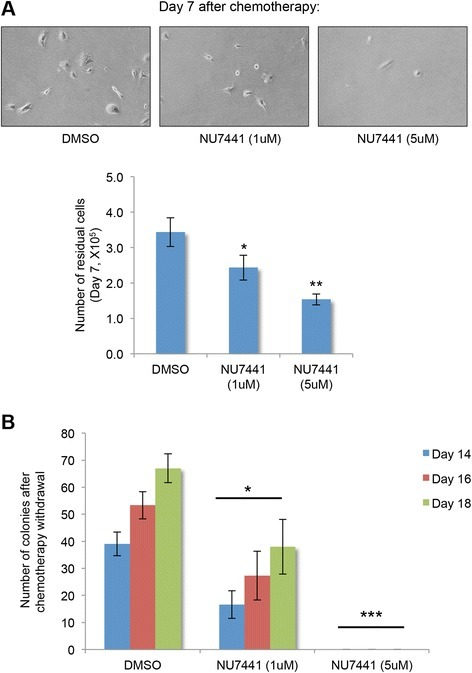 Selective DNA-dependent protein kinase (DNA-PK) inhibitor (NU7441) decreases the survival of chemo-residual tumor cells and subsequent colony formation. a SUM159 cells were treated with doxorubicin (1 μg/ml) plus dimethyl sulfoxide (DMSO) or a selective DNA-PK inhibitor (NU7441), at a non-cytotoxic concentration [36] (1 μM or 5 μM) for 2 days, as described in Fig. 1a. Fresh medium was added after treatment removal. Upper panel: pictures of chemo-residual cells were taken on day 7. Magnification ×40. Lower panel: Chemo-residual cell number on day 7 was determined by trypan blue exclusion. Error bars represent SD, n = 3, *p <0.05, **p <0.01, two-tailed Student's t test. b Colonies (containing >50 cells) were quantified on days 14, 16, and 18, respectively. Error bars represent SD, n = 3. Significance was determined relative to DMSO-treated cells at each time point using the two-tailed Student's t test (*p <0.05, ***p <0.001). Similar results were obtained in at least three independent trials