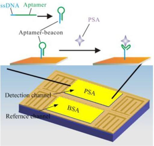 Schematic of the Love-wave immunosensor: a two channel Love-wave sensor chip is used. One channel is for PSA and the other is for the non-specific protein BSA. For specific binding of the target PSA, an aptamer beacon probe was immobilized on the gold film.