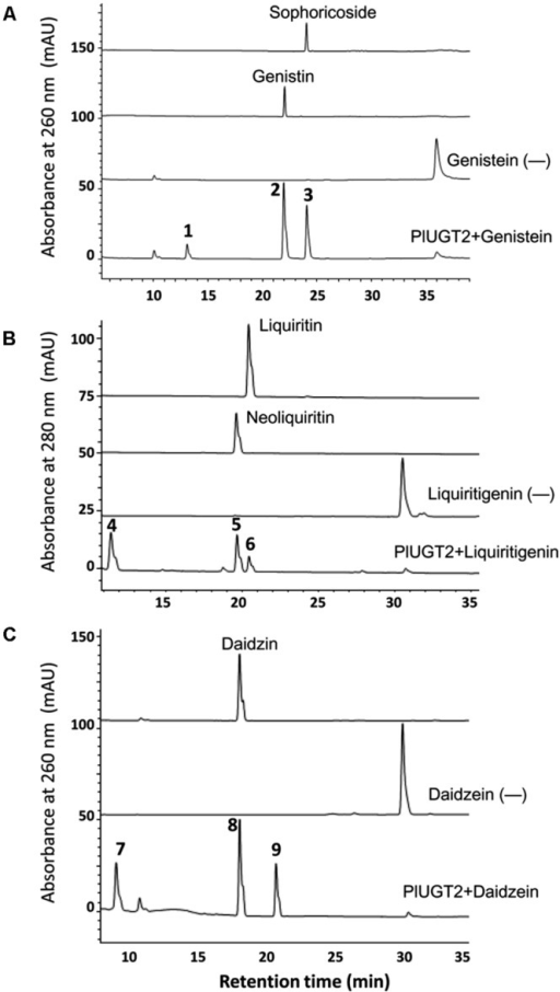 High-performance liquid chromatography (HPLC) analysis of the products from the in vitro reactions of the recombinant PlUGT2 with genitein (A), liquiritigenin (B), and daidzein (C). PlUGT2 was able to converted these (iso)flavone aglycones to yield their respective 4′,7-O-diglucosides (peaks 1, 4, 7), 7-O-mono-glucosides (peaks 2, 5, 8), and 4′-O-mono-glucosides (peaks 3, 6, 9). (-) Indicates control reactions without the addition of PlUGT2. Peak 1, genitein 4′,7-O-diglucoside; peak 2, genitin (genitein 7-O-glucoside); peak 3, sophoricoside (genitein 4′-O-glucoside); peak 4, liquiritigenin 4′,7-O-diglucoside; peak 5, neoliquiritin (liquiritigenin 7-O-glucoside); peak 6, liquiritin (liquiritigenin 4′-O-glucoside); peak 7, daidzein 4′,7-O-diglucoside; peak 8, daidzin (daidzein 7-O-glucoside); peak 9, daidzein 4′-O-glucoside. The mass spectra of all the reaction products (peaks 1–9) were shown in Supplementary Figure S3, and their chemical structures are listed in the Figure 1.