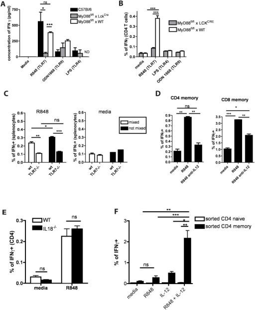 TLR7 agonist in the presence of IL-12 stimulates T cells directly leading to IFNγ production.(A) Spleen cells obtained from C57BL/6, MyD88fl/flxLCKCRE and MyD88fl/fl x WTmice were incubated in the presence of different TLR agonists as indicated for 5 days. Supernatants were analyzed for the presence of IFNγ by ELISA. Bar graphs represent concentration of IFNγ in the culture supernatants. (B) Spleen cells from MyD88fl/fl xWT or MyD88fl/flxLCKCRE mice were incubated in the presence of different TLR agonists as indicated for 18h. Cells were surface stained and intacellularly stained for IFNγ. Bar graphs represent percentage of CD4 or CD8 T cells which are positive for IFNγ. (C) TLR7-/- or conjenically marked WT (B6.SJL) splenocytes were incubated either separately (black bars) or mixed at 1:1 ratio in the presence (R848) or absence (media) of TLR7 agonist. IFNγ production was assessed by intracellular staining and the summary of three independent experiments is shown. Bars represent the means +/- SEM. (D) Splenocytes were incubated as indicated for 18h, IFNγ production by CD4 and CD8 T cells in response to indicated stimulations was assessed by intracellular staining. Bar graphs indicate percentage of IFNγ+ cells among CD4 and CD8 T cells. (E) WT or IL-18-/- splenocytes were incubated with R848 for 18h, IFNγ production was assessed by intracellular staining and the summary of three independent experiments is shown. Bars represent the means +/- SEM (similar results were obtained for CD8 T cells—not shown). (F) Naïve and memory CD4 and CD8 T cells were flow sorted as CD4 (or CD8) positive, CD19-, CD44+ (for memory) and CD44- (for naïve). IFNγ production by sorted T cells in response to indicated stimulations was assessed by intracellular staining. Bar graph represent percentage of IFNγ+ sorted memory of naïve CD4 T cells (similar data was obtained for CD8 T cells—not shown). All data are representative of three or more independent experiments.