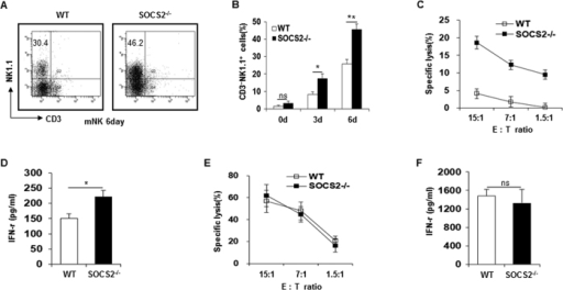 Increased NK cell differentiation of SOCS2−/− HPCs in vitro.(A,B) NK cells were differentiated in vitro from HPCs of WT and SOCS2−/− mice. After maturation (mNK), CD3 and NK1.1 expression were analyzed by flow cytometry. Data for days 0, 3 and 6 pooled from four experiments. *p < 0.05, **p < 0.01. (C) Differentiated WT and SOCS2−/− NK cells were mixed at the indicated ratio with YAC-1 target cells and NK cytotoxicity was determined by a 51Cr release assay. (D) IFN- γ production of differentiated WT and SOCS2−/− NK cells which are stimulated with IL-12 (20 ng/ml). *p < 0.05, **p < 0.01. (E) Splenic WT and SOCS2−/− NK cells were cultured with IL-2 (30 ng/ml) for 16h. The cytotoxicity of NK cells was determined by a 51Cr release assay against YAC-1 target cells at the indicated E:T ratios. (F) IFN- γ production of splenic WT or SOCS2−/− NK cells was quantified by ELISA. *p < 0.05, **p < 0.01. The data are representative of three independent experiments, and the error bars represent the SD of triplicates.