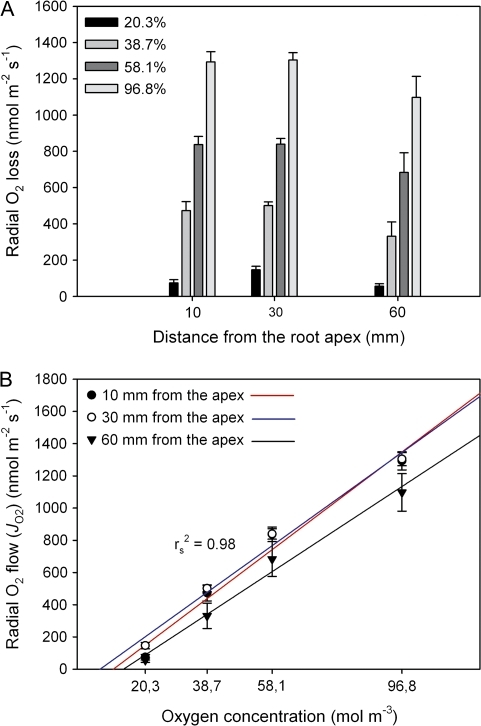 Effect of increasing oxygen concentration around the shoot of intact rice plants on radial oxygen loss (ROL) at distances of 10, 30, and 60 mm from the apex, when roots were in O2-free agar solution. Measurements were taken in a growth chamber at 27 °C for roots of 90–120 mm in length. (A) For a given position, rates of ROL significantly increased as the concentration of oxygen increased (P ≤0.05). Due to suberization and/or lignification of basal parts of the roots, the response in ROL at a distance of 60 mm was smaller than that of other distances for each concentration difference. (B) Increases of ROL with increasing oxygen concentration were linear. Extrapolating the regressions to intercept the x-axis provided concentration values when the use of oxygen in the plant just compensated axial diffusional transport along aerenchyma. Red, blue, and black lines represents regressions for 10, 30, and 60 mm, respectively. Data are means ±SE (n=5–7).