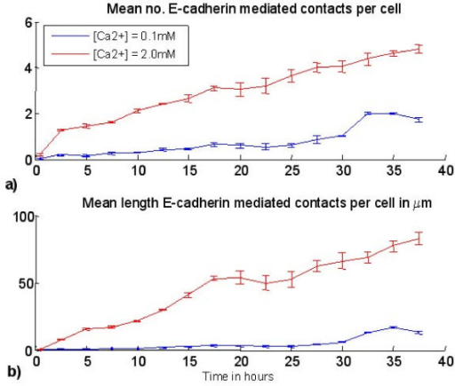 Agent model results – intercellular contacts. a) Mean number of E-cadherin mediated contacts per cell predicted by the agent model for a starting cell density of 200 agents/mm and b) mean total perimeter length of each agent associated with E-Cadherin mediated contacts. Vertical lines represent standard deviation calculated from 3 simulations.