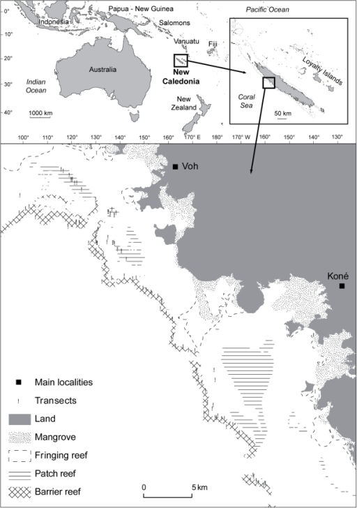 Location of the transects surveyed near Koné, north-western coast of New Caledonia, South-West Pacific.Reef types (from [29]), mangroves and land are indicated.