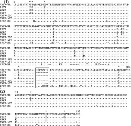 Alignment of Passatempo virus (PSTV) hemagluttinin antigen (HA) and vaccinia grown factor (VGF) amino acid inferred sequences with other orthopoxvirus sequences. 1, HA sequence of PSTV (DQ070848) was compared to the region corresponding to amino acids 6 to 309 of vaccinia virus (VACV-WR, AY243312) HA sequence and to HA sequences of Araçatuba virus (ARAV, AY523994); Cantagalo virus (CTGV, AF229247); vaccinia virus IOC (VACV-IOC, AF229248); vaccinia virus Lister (VAVC-LST, AF375124) and cowpox virus Brighton Red (BR) (CPXV-BR, AF482758). 2– The VGF sequence of PSTV (DQ085462) was compared to the region corresponding to amino acids 19 to 135 of vaccinia virus WR (VACV-WR, AY243312) and to the same region of Araçatuba virus (ARAV, AF503170), vaccinia virus Lister (VACV-LST, AY678276); and cowpox virus BR (CPXV-BR, AF482758). The sequences were obtained from GenBank and aligned by using the default parameters of CLUSTAL W and hand-edited to enhance biologically significant regions. The amino acid positions are shown according to the VACV-WR HA and VGF protein sequences. (.) indicates identity of amino acids, (-) indicates deletions, and (*) indicates the PSTV amino acid substitutions. The box shows the conserved deletion observed in the HA sequence of the Brazilian VACVs. Amino acids substitution found amongst PSTV and other Brazilian VACVs are shown in gray boxes.