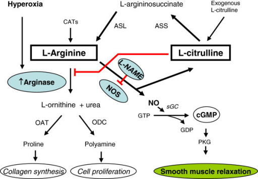 Schematic presentation of the role of L-citrulline/L-ar | Open-i