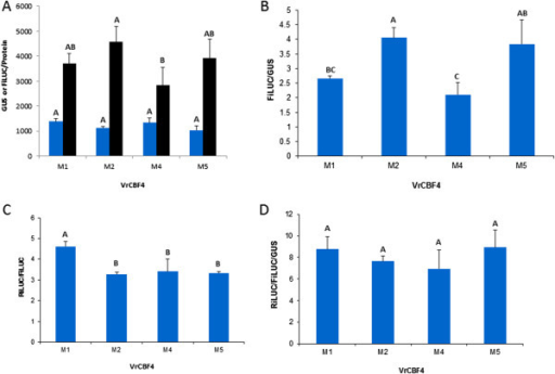 Analysis of reporter gene expression after agroinfiltration of tobacco leaves with VrCBF4 effector in combination with four different 4XCRTmin35S reporter constructs. [A] GUS/protein (blue bars) and FiLUC/protein (black bars), [B] FiLUC/GUS, [C] RiLUC/FiLUC, [D] RiLUC/FiLUC/GUS. Shown are the averages of three technical replicates and their standard deviation. Different letters indicate statistically significant differences (ANOVA p < 0.05).