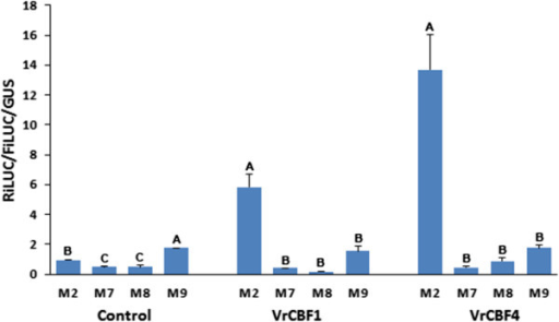 Activation by VrCBF1 or VrCBF4 on CRT (M2) and mutated core CRT sequence. M2: TGCCGACAT, M7: TGAAGACAT, M8: TGCCGCCAT, M9: TGCCGAAAT. Error bars represent the standard deviation. Infiltrations without CBF effector were included as control. Statistical analysis was performed on the set of no CBF, VrCBF1 and VrCBF4 data separately and significantly different activation values (ANOVA p < 0.05) are indicated by different letters. Similar results were obtained for two other independent experiments.