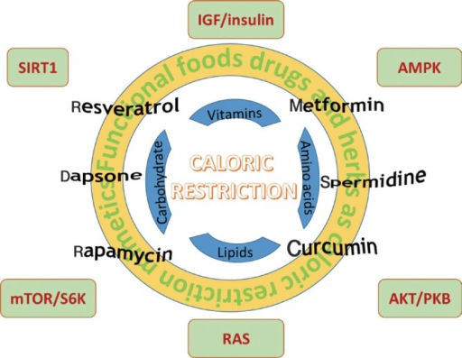 In response to different dietary intake, a number of nutrient sensing pathways are activated or inactivated to modulate the ageing process. IGF, insulin-like growth factor; SIRT1, Sir2-like protein 1; AMPK, AMP-activated protein kinase; mTOR/S6K, mammalian target of rapamycin/ribosomal protein S6 kinase; ROS, reactive oxygen species; AKT/PKB, AKT/protein kinase B.