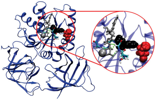 His22 and Met112 form close contacts in the secondary shell surrounding the P-loop of EF-Tu.The model of E. coli EF-Tu·GTP is shown in cartoon representation after 10 ns of molecular dynamics simulation. Bound GTP and Mg2+ are shown as sticks and space-filling, respectively, both coloured silver. The backbone atoms of the P-loop are shown as sticks and hydrogen bonds between P-loop amide hydrogen atoms and phosphate oxygen atoms of GTP are shown as green dashed lines. His22 (black) of the P-loop and Met112 (red) of the adjacent coil are shown in space-filling representation.