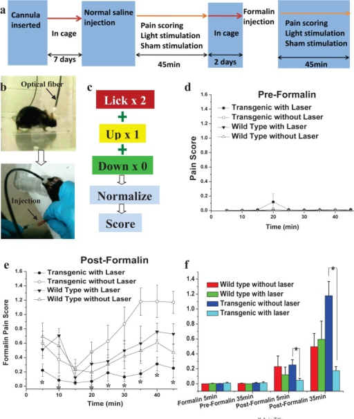 Behavioral assay of pain inhibition by optogenetic modulation of ACC.(a) Experimental scheme for Formalin test. (b) Optical fiber mounted via cannula in mouse brain (upper panel). Lower panel shows saline or Formalin injection in hind paw. (c) Pain scoring. (d) Pre-formalin pain score of different mice groups, (e) pain score of same groups of mice in post-formalin condition. *P < 0.05 vs. others (transgenic laser off, wild type laser on and wild type laser off). (f) Histogram for comparison of pre and post formalin pain scores for various mice groups at two different time points. *P < 0.05 vs. control (laser off), n = 10 for each group.