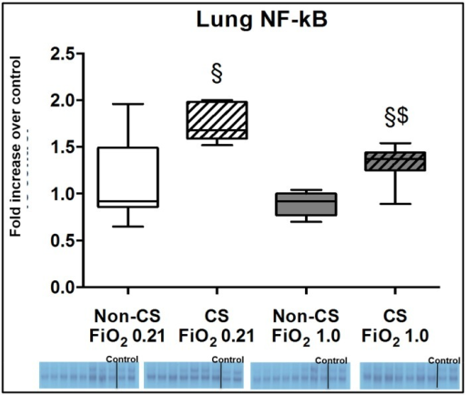Results of the EMSA for NF-κ activation.Original gel shifts and quantitative analysis of lung tissue expression of NF-κB activation from mice without (open boxplots; n = 8 each) and with (hatched boxplots; n = 7 each) cigarette smoke exposure prior to blunt chest trauma and mechanically ventilated with air (white boxplots) and 100% O2 (grey boxplots) together with two blots each (right part of blot panel) from control animals that did not undergo cigarette smoke exposure, anaesthesia, chest trauma, and surgery. All data are median (quartiles, range) as fold increase over values from control animals; § p < 0.05 vs. corresponding cigarette smoke exposure group, $ p < 0.05 vs. corresponding air ventilation group (Kruskall-Wallis analysis of variance on ranks with post-hoc Dunn's test for multiple comparisons).