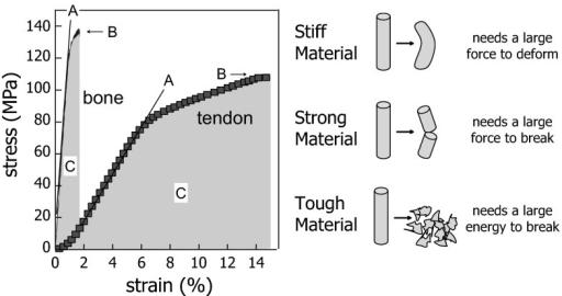 stress vs strain curve explanation pdf