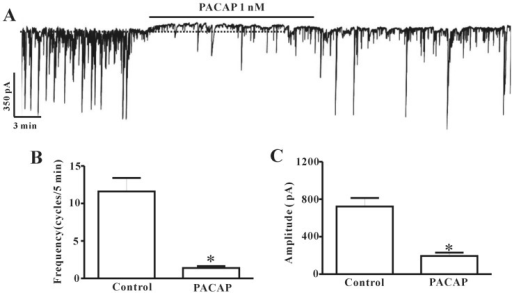 Effects of pituitary adenylate cyclase-activating peptide (PACAP) on pacemaker currents recorded in cultured interstitial cells of Cajal (ICC) from mouse colon. (A) shows the pacemaker currents of ICC exposed to PACAP (1 nM) in voltage-clamp mode at -70 mV holding potentials. PACAP inhibited the amplitude and frequency of pacemaker currents in ICC. The dotted lines indicate the control resting current levels. Responses to PACAP are summarized in (B) and (C). Bars represent the means±SE. *Asterisks indicate a statistically significant difference from controls (p<0.05).