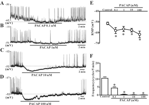 Effects of various concentrations of pituitary adenylate cyclase-activating peptide (PACAP) on pacemaker potentials recorded in cultured interstitial cells of Cajal (ICC) from mouse colon. (A), (B), (C), and (D) show pacemaker potentials of ICC exposed to PACAP (0.1 nM, 1 nM, 10 nM, or 100 nM) under current-clamp mode (I=0). Vertical solid lines represent the amplitude of pacemaker potentials and horizontal solid lines represent the duration of recording (s) of pacemaker potentials. The dotted lines indicate the resting membrane potential. (E) and (F) summarize the effects of PACAP on pacemaker potentials in ICC. Bars represent the means±SE. *Asterisks indicate a statistically significant difference from controls (p<0.05). Con, control.