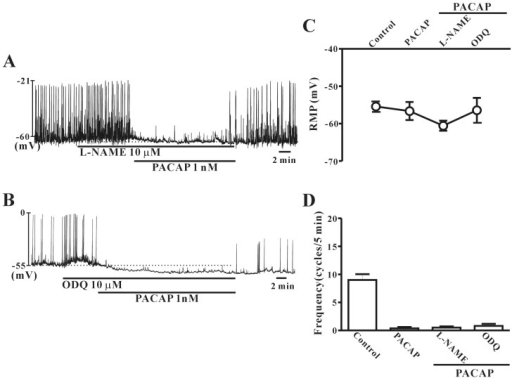 Effects of NG-nitro-L-arginine methyl ester (L-NAME) or 1H-[1,2,4]oxadiazolo[4,3-α]quinoxalin-1-one (ODQ) on pituitary adenylate cyclase-activating peptide (PACAP)-induced responses of pacemaker potentials in cultured interstitial cells of Cajal (ICC) from mouse colon. (A) L-NAME (a competitive inhibitor of NO synthase; 10 µM) did not have any effect on PACAP-induced action in colonic ICC. (B) ODQ (an inhibitor of guanylate cyclase; 10 µM) also did not show any effect on PACAP-induced action in colonic ICC. (C) and (D) summarize the effects of PACAP on pacemaker potentials in colonic ICC with L-NAME or ODQ. Bars represent the means±SE. Con, control.